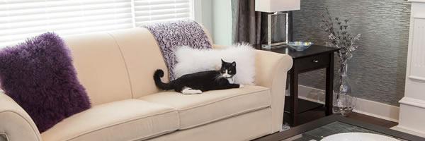 Cat enjoying newly renovated livingroom