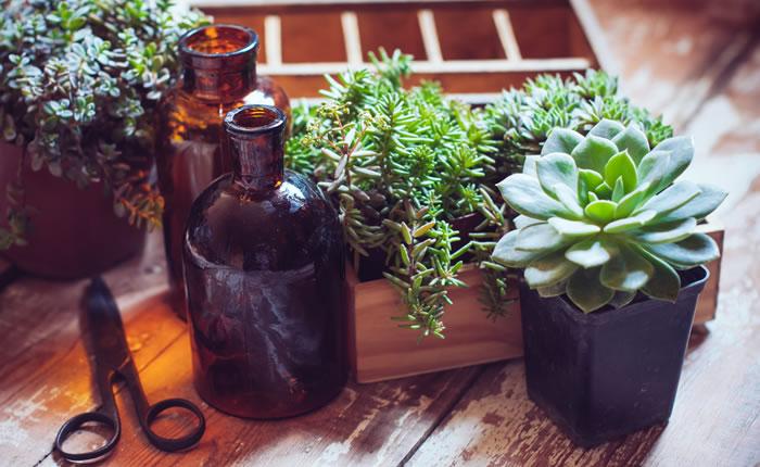 House Plants & Bottles