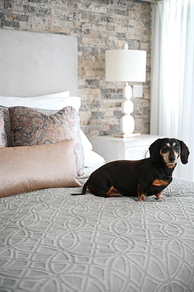 Frankie on Bed Sitting