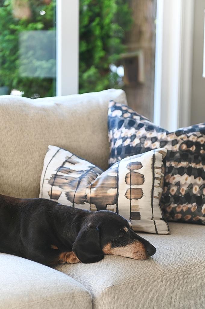 Frankie on Sofa