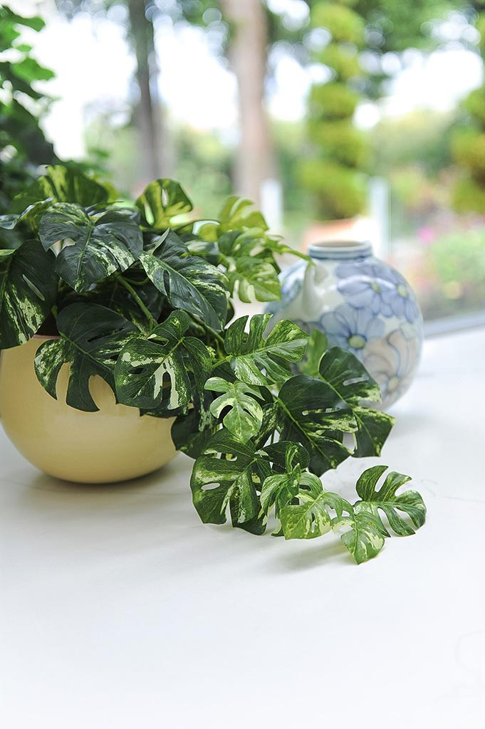 Plant on Counter